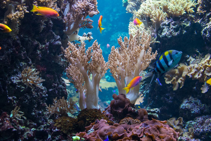 Tropical Fish Swimming by Coral at the Berlin Aquarium