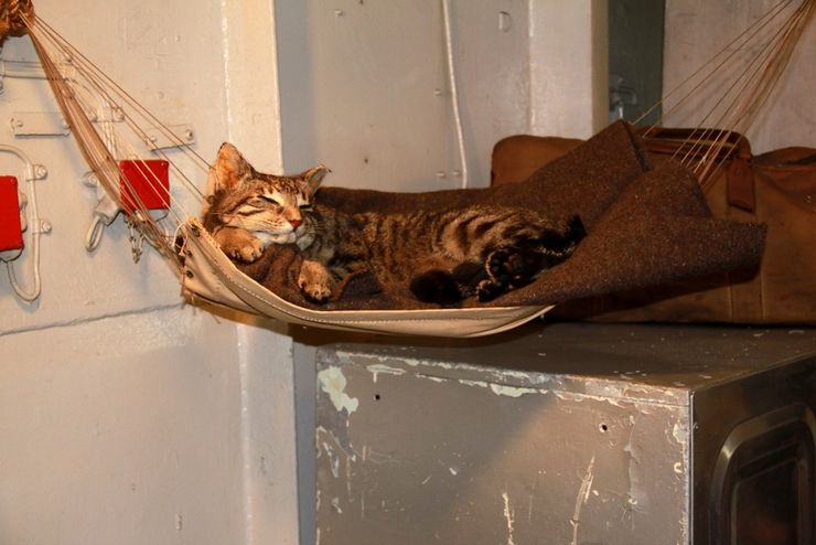 The ship's resident cat relaxing in its own hammock