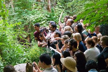 Something in the forest draws a crowd inside the Montreal Biodome