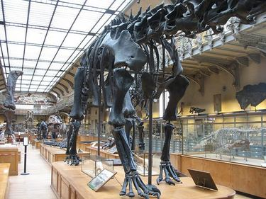 Gallery of Palaeontology and Comparative Anatomy at the National Museum of Natural History