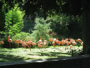 Flamingos in the Menagerie at the Jardin des Plantes