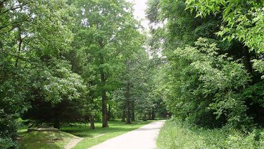 Tree lined pathway through Taylor Creek Park provides a pleasant escape from the bustling city
