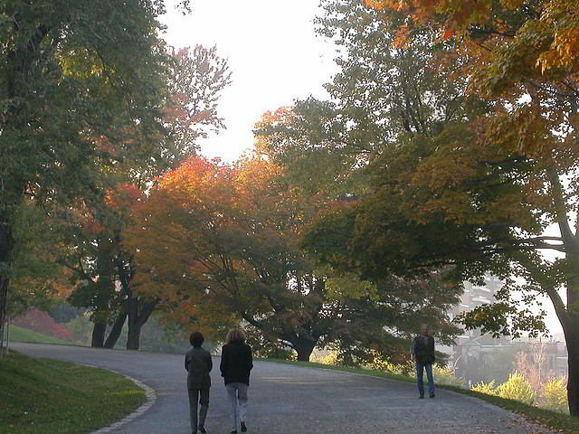 Enjoy a stroll in Parc du Mont-Royal