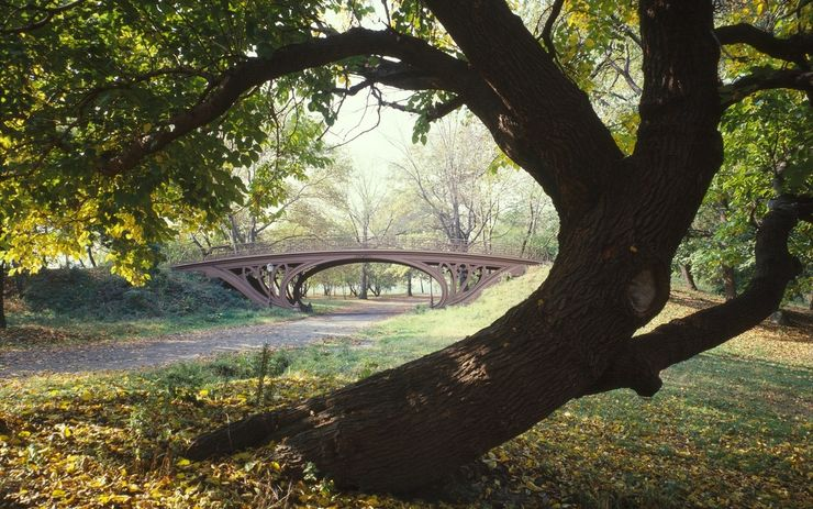 A tree frames one of the many unique bridges in Central Park