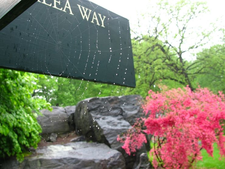 Azalea Way in the New York Botanical Garden