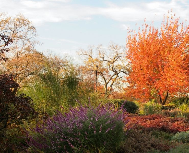 Blazing Colours in the Heather Garden at Fort Tryon Park