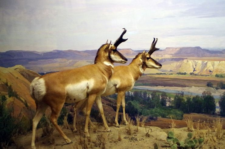 One of many dioramas inside of the American Museum of Natural History