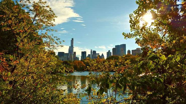 A screened view of Manhattan's highrises from Central Park