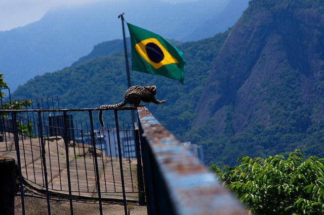 Monkeys also enjoy the great views from Forte Duque de Caxias
