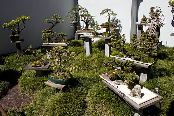 Bonzai plants in the Chinese Garden of Friendship