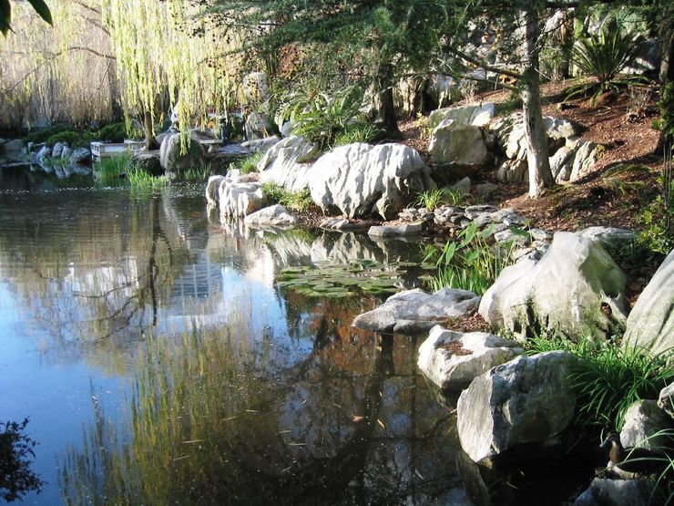 A pond reflecting the natural beauty of the Garden