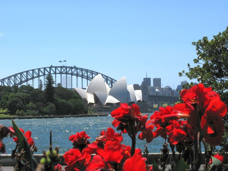 Flowers at the Royal Botanic Gardens frame the Sydney Opera House and Harbour Bridge