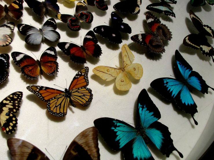 Butterly exhibit
