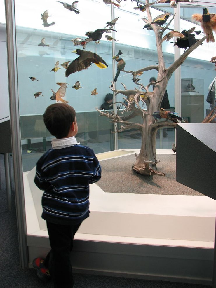 A child is captivated by a display of birds at the Royal Ontario Museum