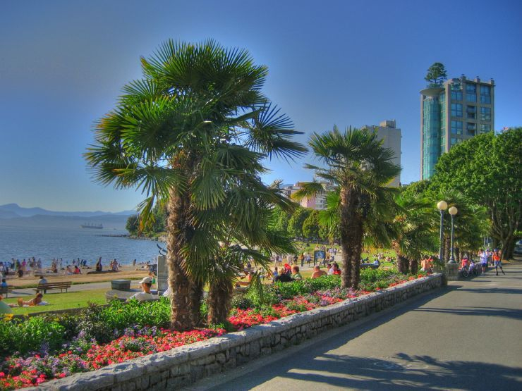 Palm Trees Lining English Bay Beach Park